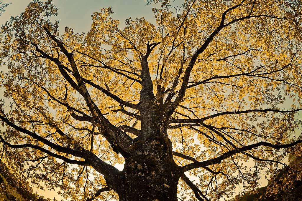 Eiche-Herbstlaub-2.jpg
